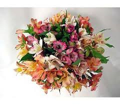 Wrapped to Go Alstroemeria